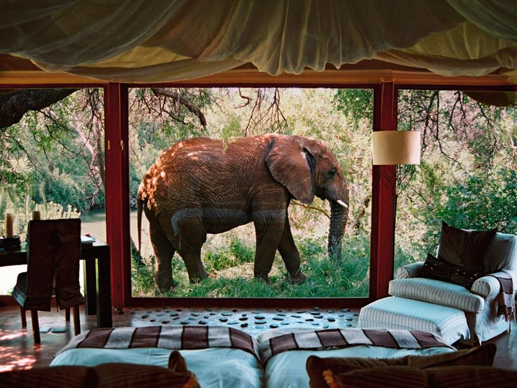 Makanyane_Safari_Lodge_Elephant
