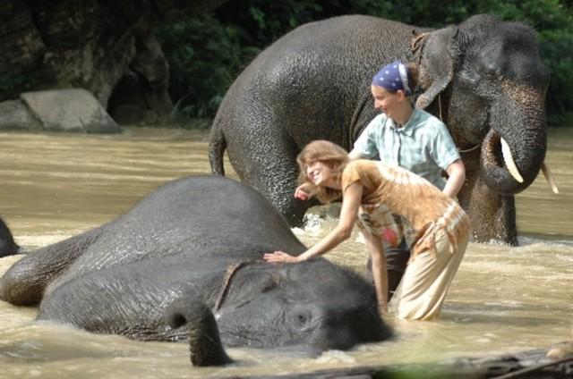 Daftar Tempat Wisata untuk Lihat Satwa Langka di Indonesia