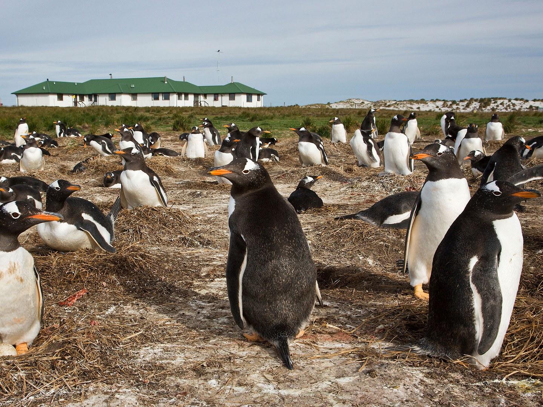 sea-lion-lodge-falkland-islands