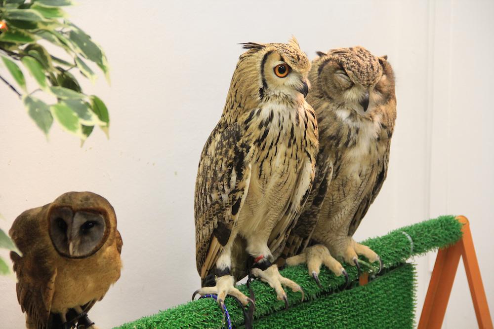 Tokyo-Owl-Cafe