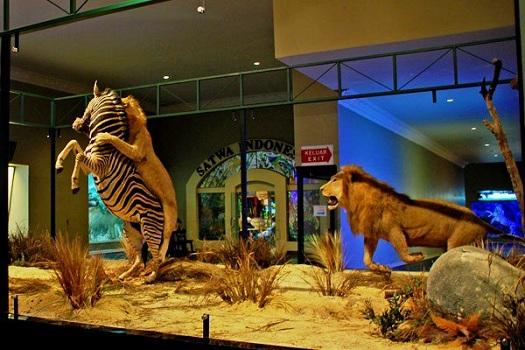 Museum-Satwa-Jawa-Timur-Park-Batu