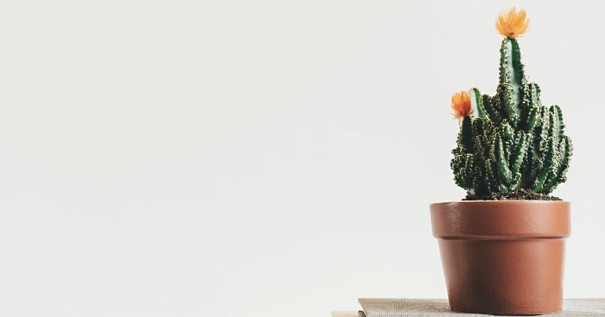 Pot Bunga - Ubah Sampah Jadi Berkah