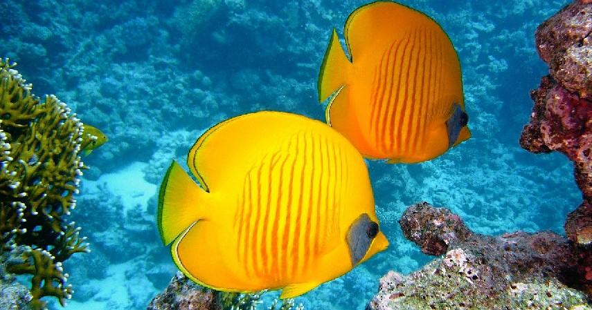 Tidak memelihara hewan laut - Yuk Jaga Laut Kita!