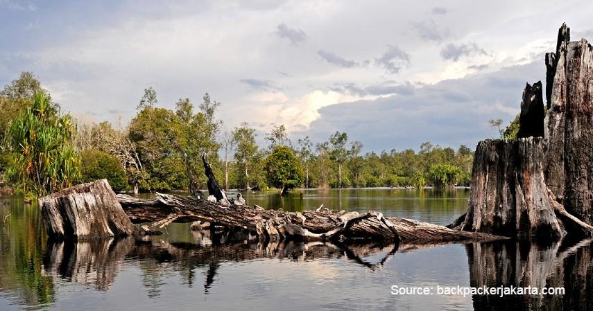 Taman Nasional Sebangau - Menjelajah 8 Objek Wisata di Daerah Calon Ibu Kota Baru Indonesia