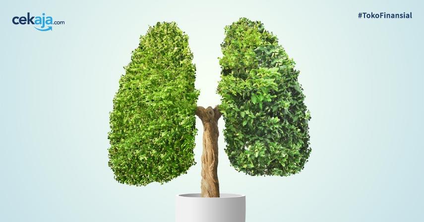 Hutan, Paru-paru, Kalimantan Timur, Oksigen