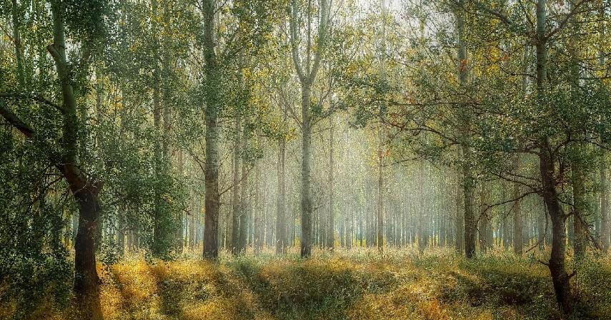 Dulunya hutan - Ke Negeri di Atas Awan Punya Banten, Yuk!.jpg
