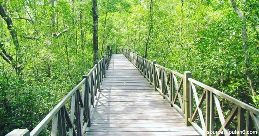 Ekowisata Mangrove penajam - Objek Wisata Khas Penajam Paser dan Kutai Kertanegara