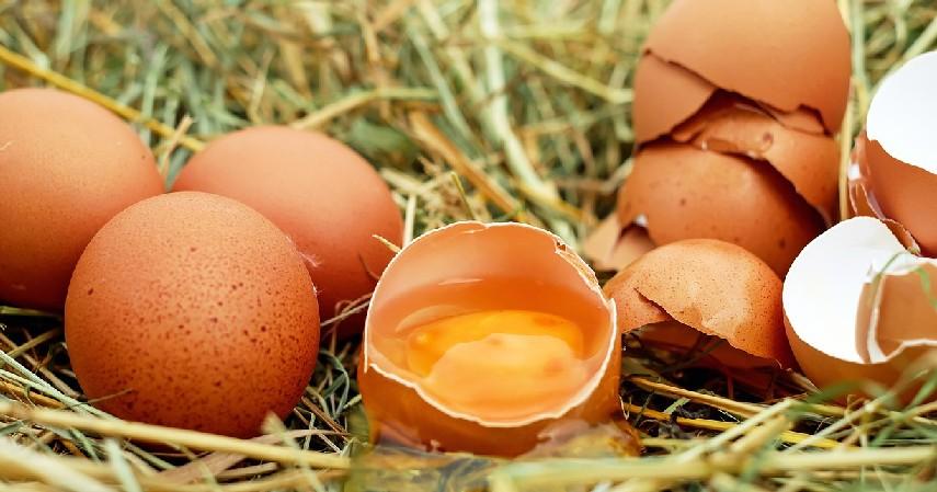 Konsumsi banyak protein - Insiden Penusukan Wiranto, Lakukan 7 Hal Ini Agar Luka Cepat Pulih!.jpg
