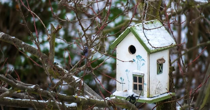 Serba-serbi Sarang Burung Walet, Bisnis Menjanjikan yang Tak Lekang Waktu