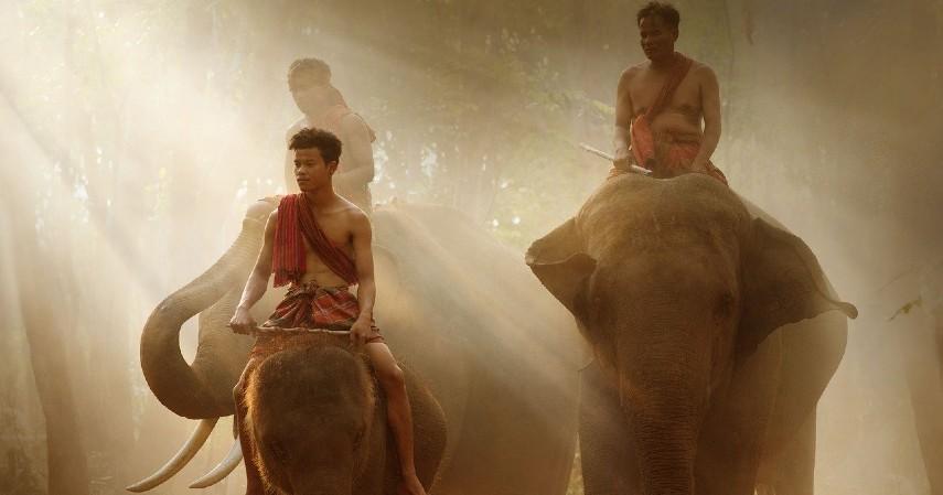 Mencoba safari gajah - Wisata Candi Borobudur, Salah Satu Warisan Dunia Kebanggaan Indonesia.jpg