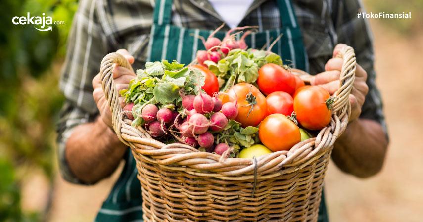 Sukses Budidaya Sayuran Organik dengan Beberapa Tips Berikut Ini