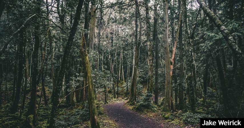Hutan bunuh diri