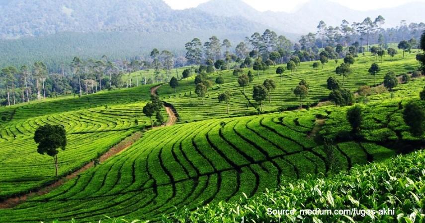 Kebun Teh Ciater - 10 Tempat Wisata Paling Favorit di Subang Jawa Barat