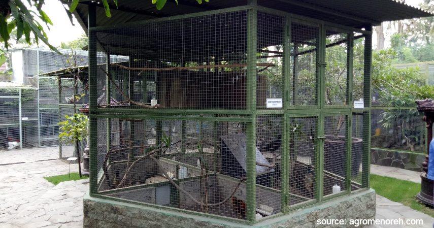 Mempersiapkan Lokasi dan Kandang - Cara Budidaya Ternak Ayam Petelur untuk Pemula