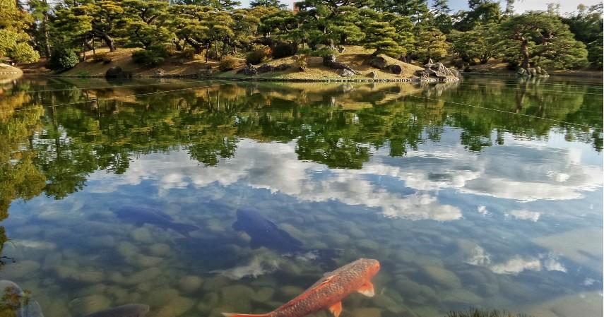 Pembuatan Kolam - Langkah Mudah Budidaya Ternak Ikan Koi untuk Pemula