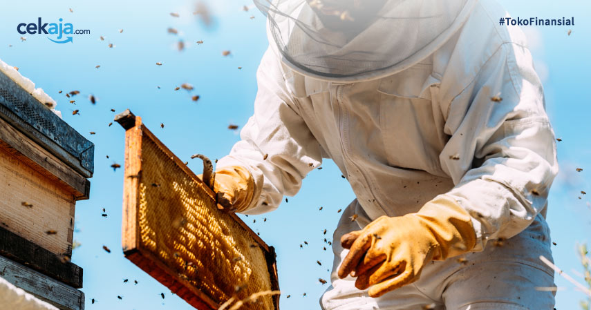 Panduan Budidaya Ternak Lebah Madu, Pemula Wajib Tahu!