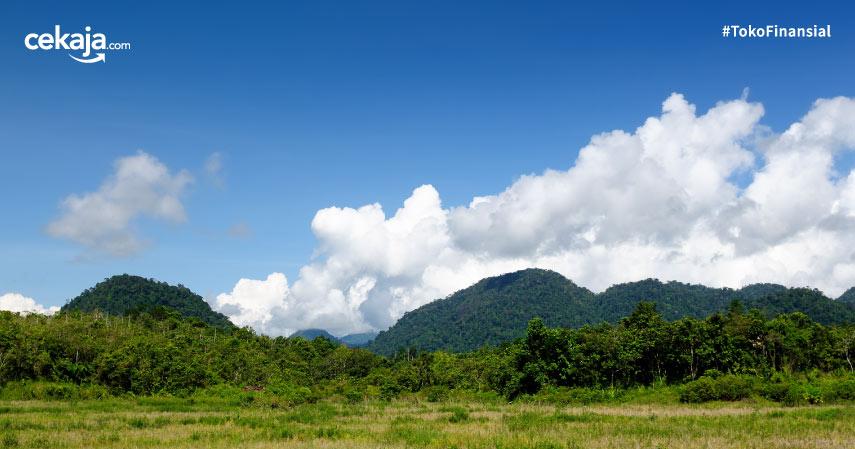 Mengenal Flora dan Fauna di Kalimantan Timur yang Langka dan Terancam Punah