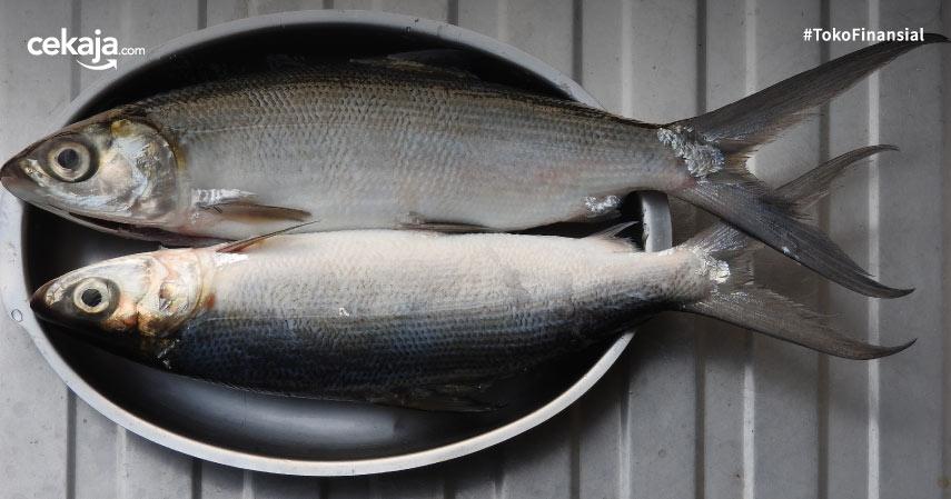 Cara Budidaya Ikan Bandeng Terlengkap dan Termudah Untuk Pemula