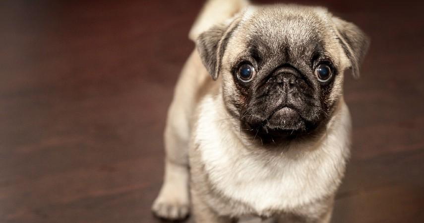 Anjing - 10 Hewan Terpintar di Dunia Ada yang Pintar Mengingat hingga Meramal