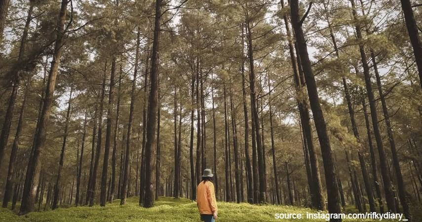 Baturaden Banyumas Jawa Tengah - Daftar Kota dengan Letak Tertinggi di Indonesia Mana yang Paling Dingin