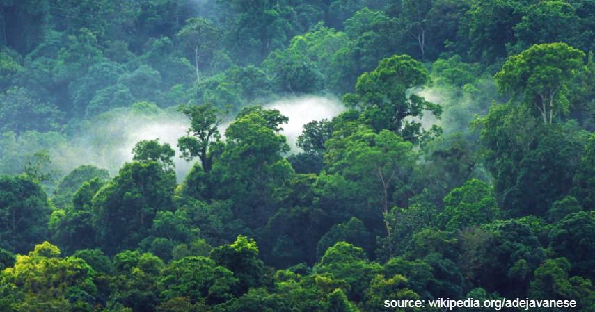 Bukit Halimun - 10 Tempat Wisata Bogor Terbaru 2020 dan Harganya
