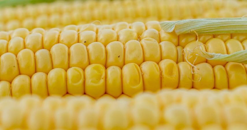 Jagung - 15 Makanan Untuk Penderita Diabetes yang Paling Direkomendasikan