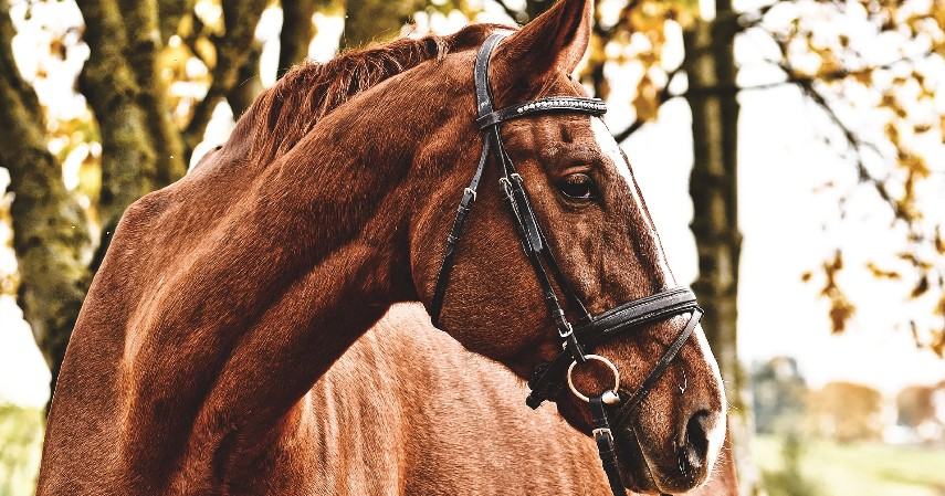 Kuda - 10 Hewan Terpintar di Dunia Ada yang Pintar Mengingat hingga Meramal