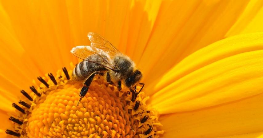 Lebah - 10 Hewan Terpintar di Dunia Ada yang Pintar Mengingat hingga Meramal