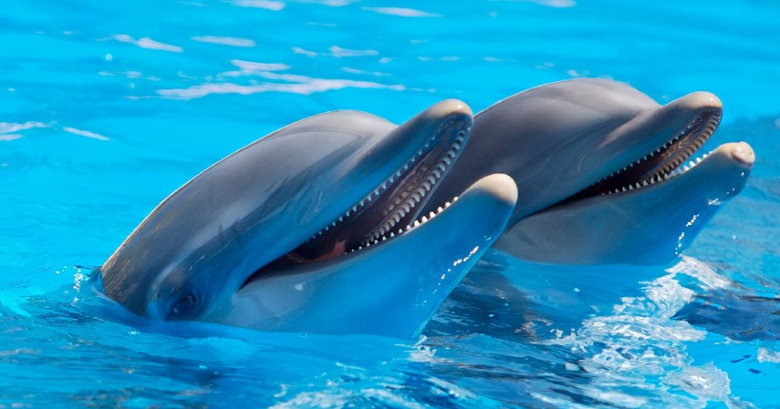 Dolphins - 10 Wiseest Animals іn thе World Sоmе Wise Frоm Remember tо Predict