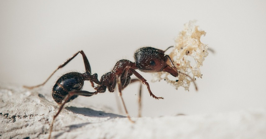 Semut - 10 Hewan Terpintar di Dunia Ada yang Pintar Mengingat hingga Meramal