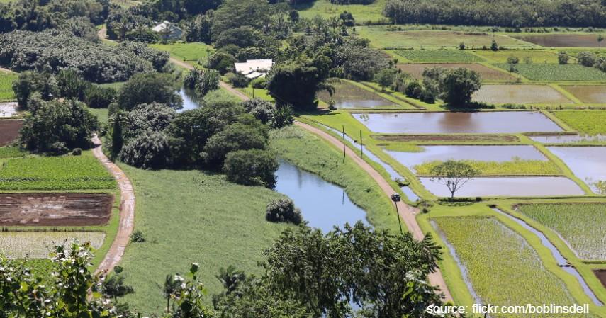 Sungai Hanalei Hawaii - 7 Sungai Terbersih di Dunia Mana yang Jadi Favorit Wisatawan