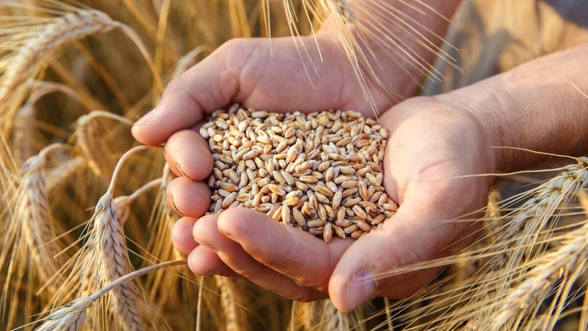 Gandum utuh - Pengen Lebih Sehat di 2020 Konsumsi 10 Jenis Makanan Ini