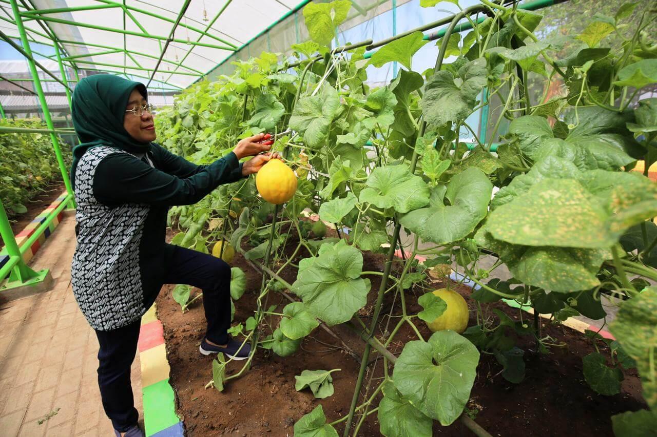 Mini Agrowisata Surabaya - Tujuan Wisata Favorit Dan Gratis Di Surabaya Yang Wajib Kamu Kunjungi