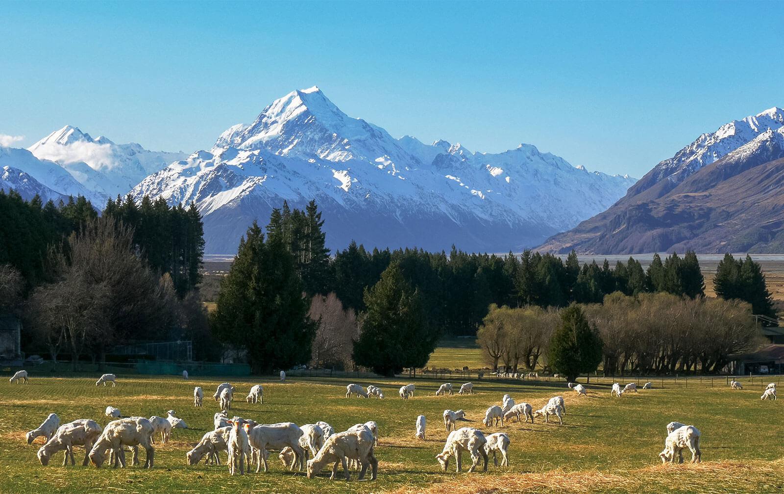 Selandia Baru - Mencicipi Serunya Liburan ke Negara Favorit Para Artis