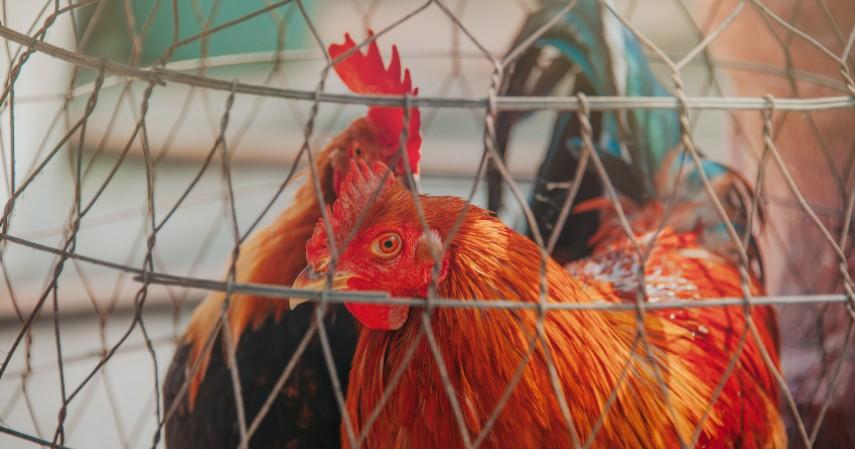 Bisnis rental hewan peliharaan - Konsep Bisnis Paling Unik di Dunia