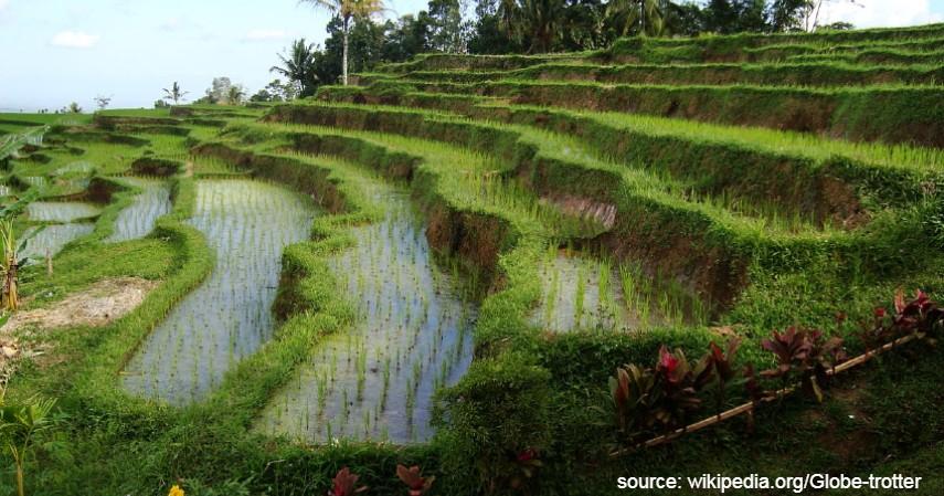 Subak - Warisan Budaya Asli Indonesia yang Diakui UNESCO Selain Borobudur