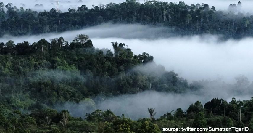 Taman Nasional Bukit Barisan Selatan - Warisan Budaya Asli Indonesia yang Diakui UNESCO Selain Borobudur