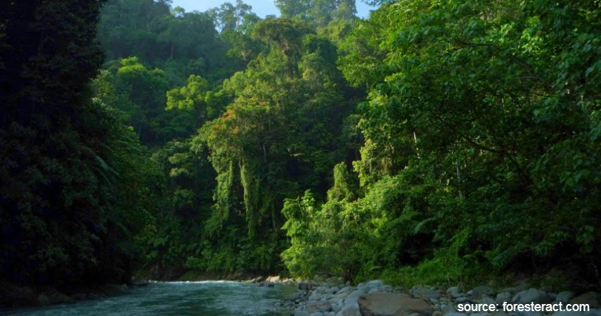 Taman Nasional Gunung Leuser - Warisan Budaya Asli Indonesia yang Diakui UNESCO Selain Borobudur