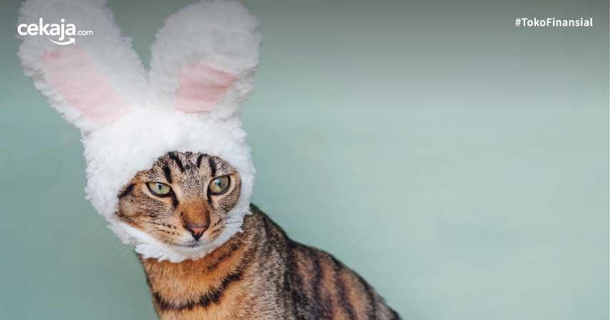 Memelihara Kucing saat Hamil Berbahaya? Jangan Khawatir, Ini Cara Amannya