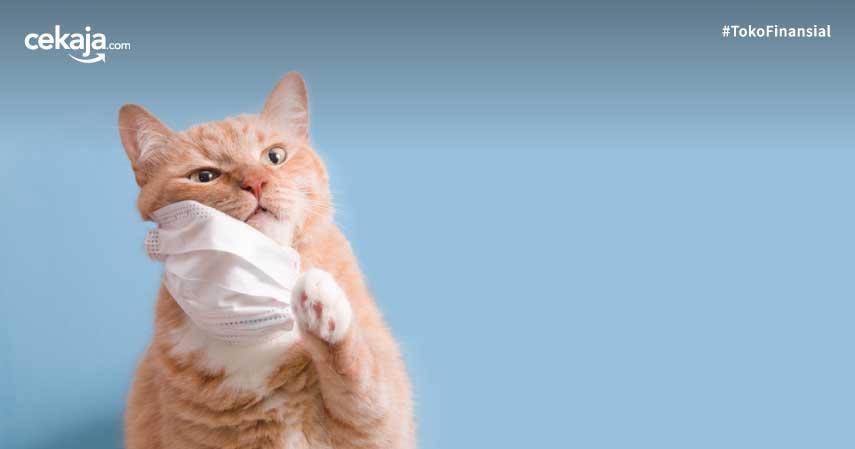 virus corona ke kucing dan anjing