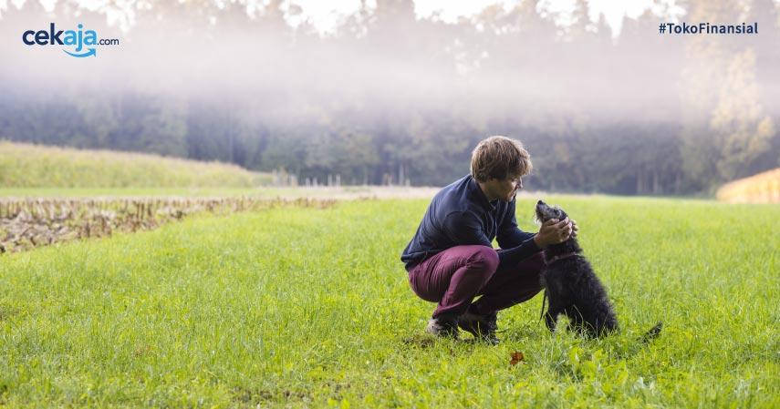 Rekomendasi 6 Film Tentang Persahabatan dengan Hewan