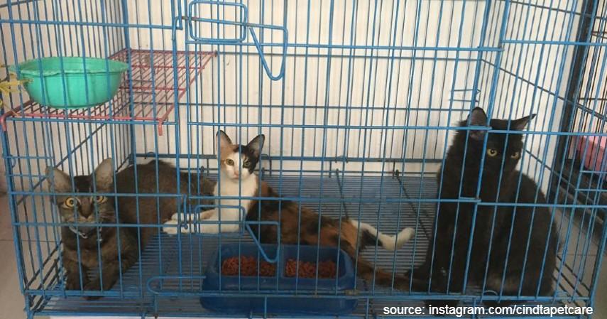 Cindta Pet Care - 6 Tempat Penitipan Hewan Terbaik di Kota Yogyakarta