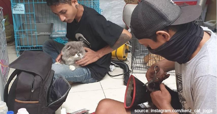 Kenz Cat Jogja - 6 Tempat Penitipan Hewan Terbaik di Kota Yogyakarta