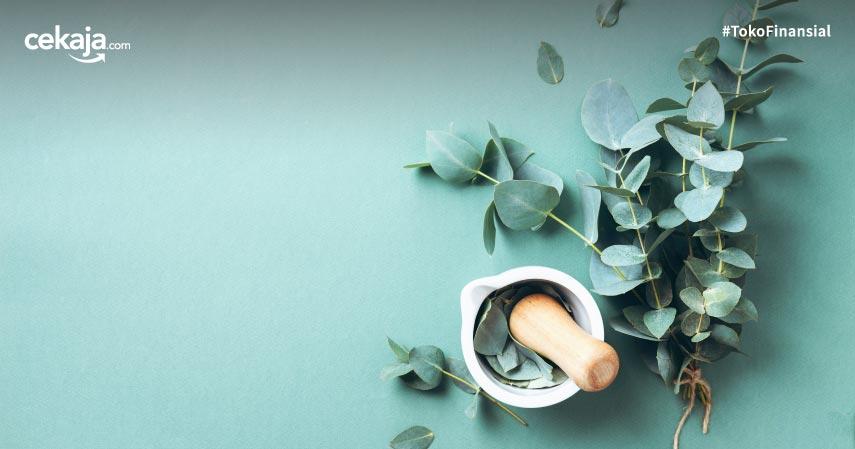 Benarkah Eukaliptus Mencegah Corona? Berikut Penjelasannya!