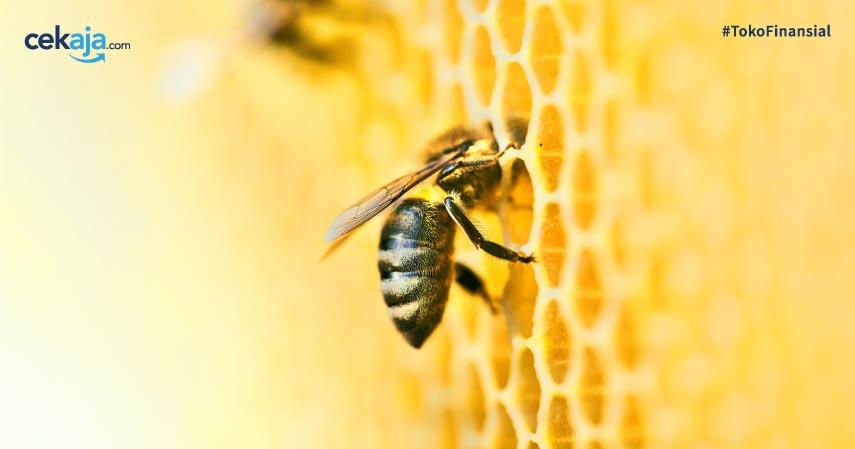 Mengenal Propolis dari Lebah Tetragonula Biroi Aff Obat Alternatif Virus Corona