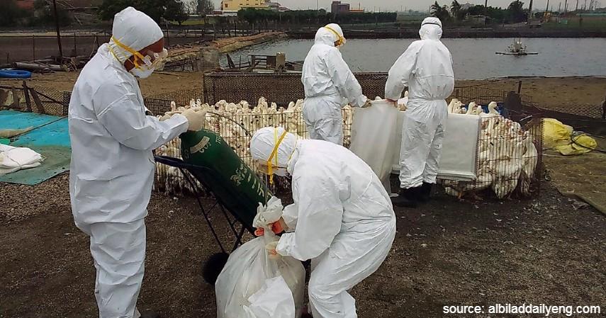 H5N1 - Virus Berbahaya dari Hewan Selain Corona Wajib Tahu
