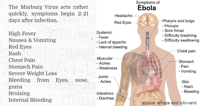 Marburg Virus dan Ebola - Virus Berbahaya dari Hewan Selain Corona Wajib Tahu