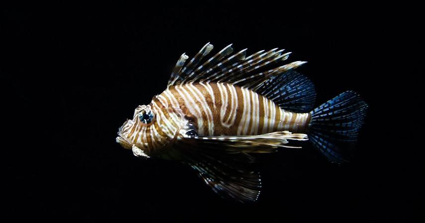 Menentukan Jenis Ikan Hias dan Pangsa Pasar - Tips Sukses Usaha Ikan Hias Modal Kecil untuk Pemula