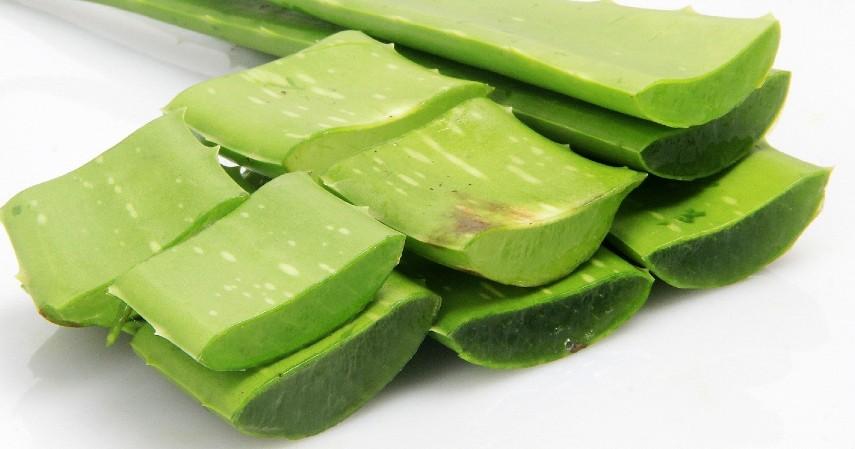 Tanaman Herbal - 5 Jenis Makanan Diet yang Aman Bagi Penderita Maag