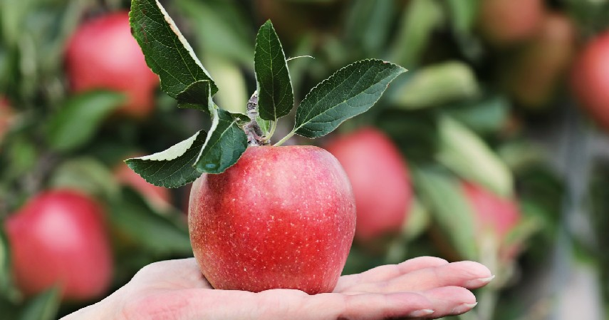 Masa pemanenan - 5 Cara Menanam Buah Organik di Rumah Mudah dan Banyak Manfaatnya